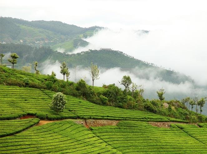 Munnar Thekkady Alleppey Exp 3