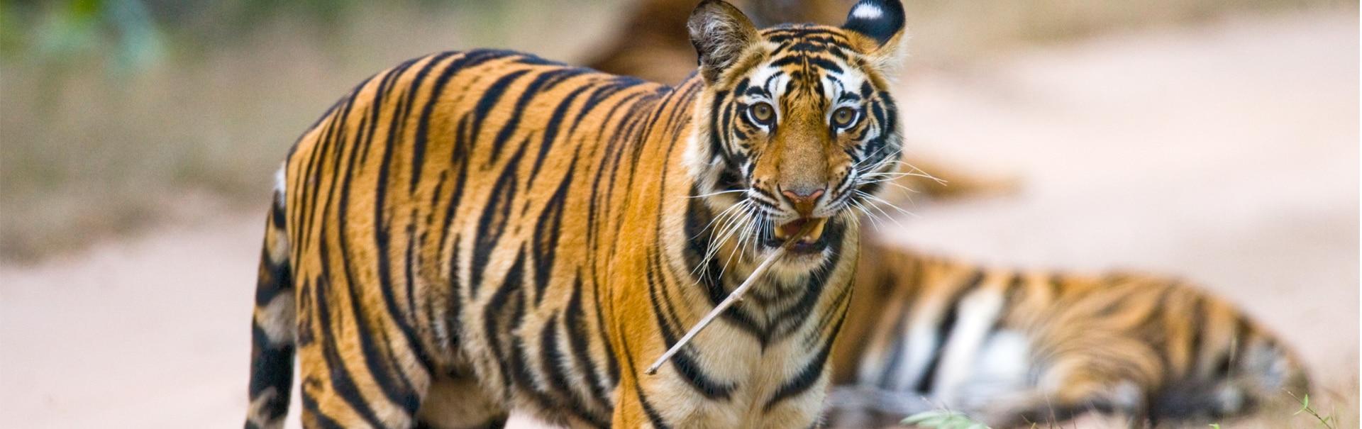 Temples, Wildlife and Nature of Madhya Pradesh (SHMP13) Banner