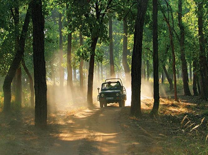 Temples, Wildlife and Nature of Madhya Pradesh Exp 2