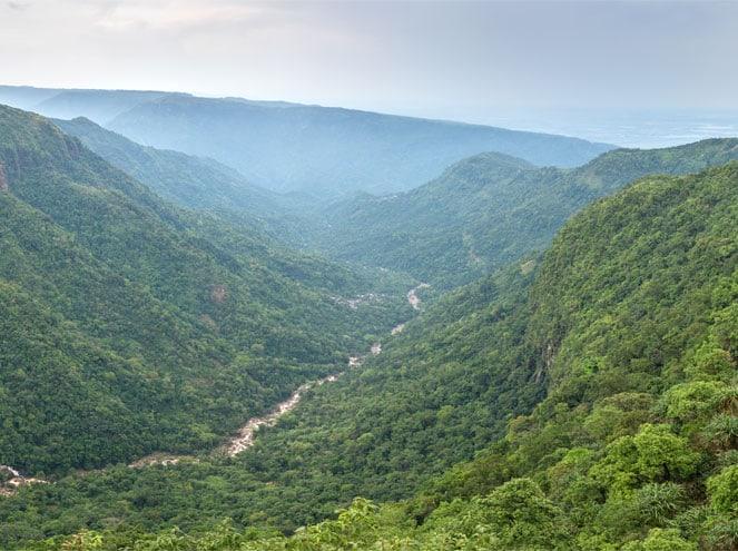 Meghalaya Forest