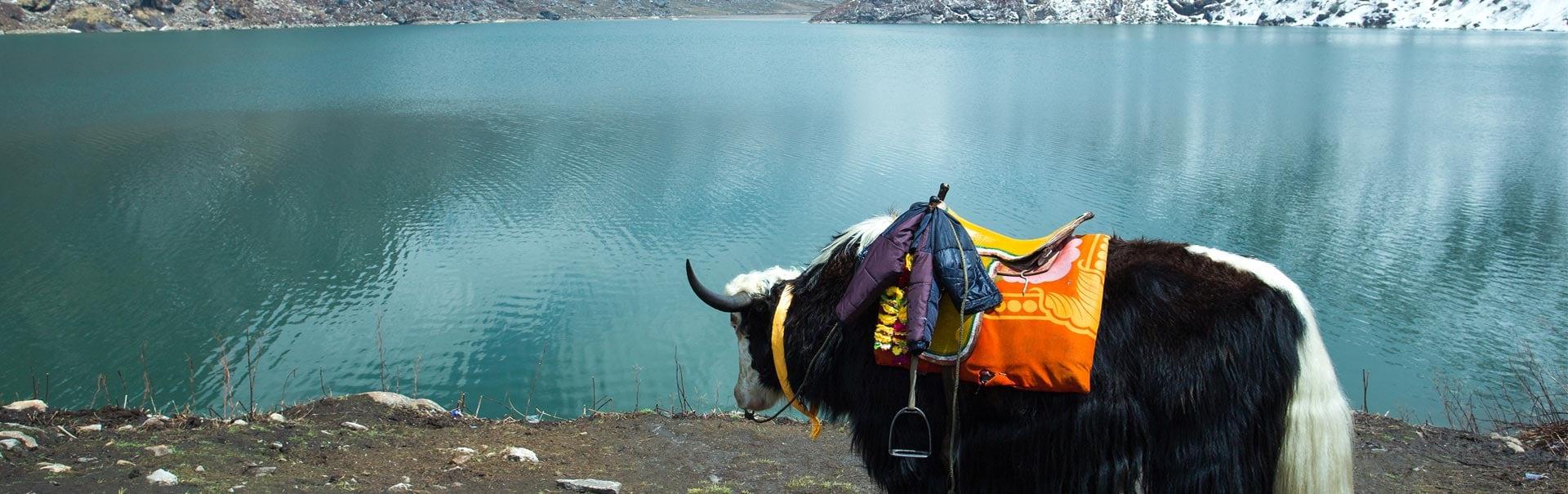 Best of Sikkim Darjeeling (SHSD1) Banner