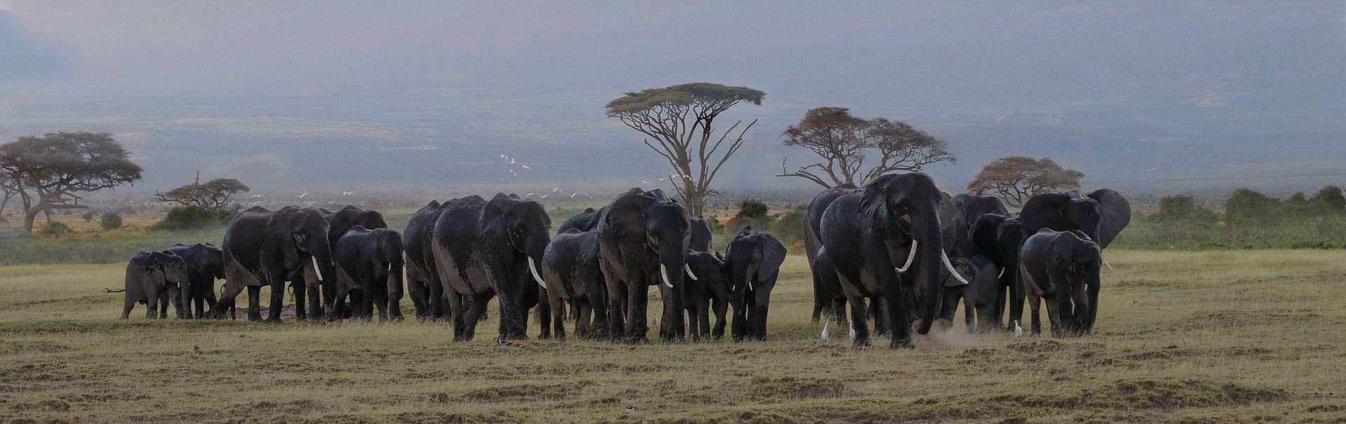 Serengeti with Kenya Tanzania (SHAF3) Banner
