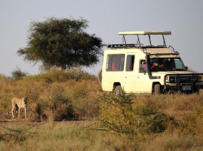 kenya tanzania jeep safari