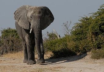 Africa Customized Holidays Tour Highlights