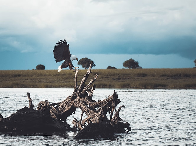 botswana chobe national park
