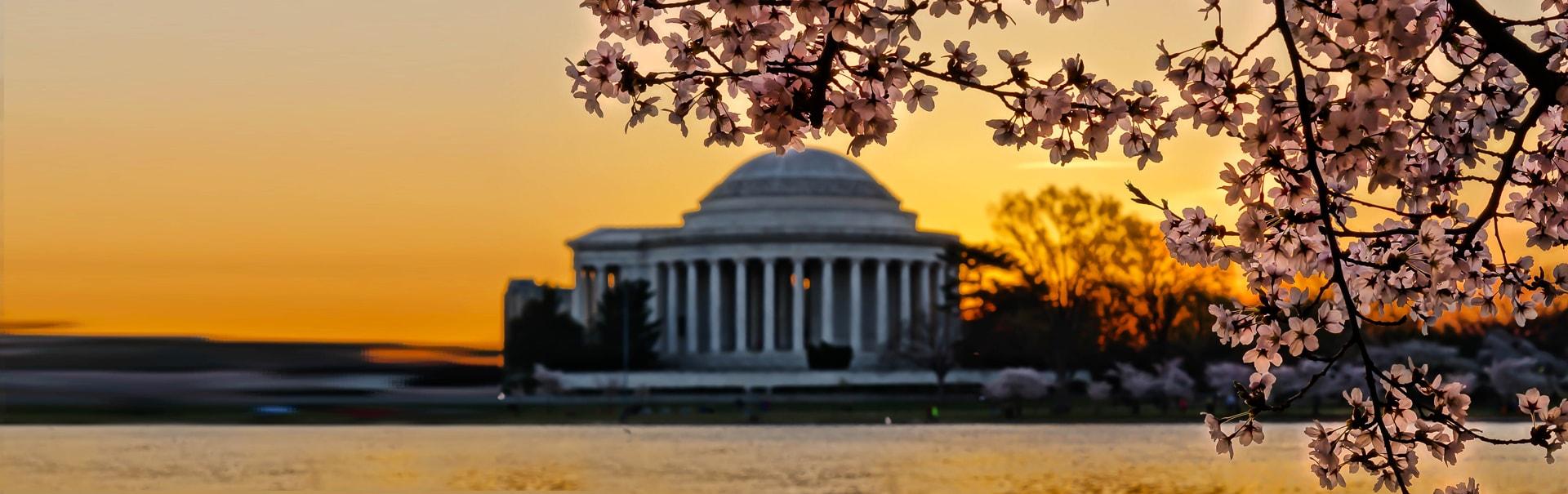 Cherry Blossom in Washington DC (SHUS35) Banner