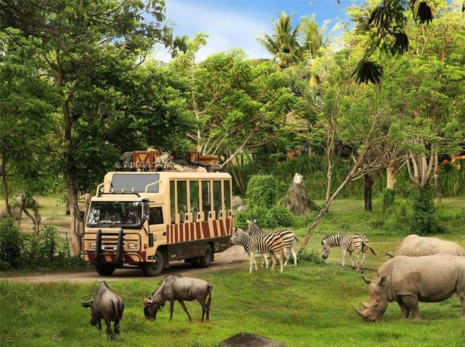 Bali Wildlife