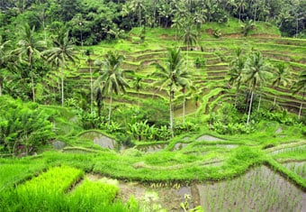 7 Days 6 Nights Bali With Gili Customized Holidays Tour Package