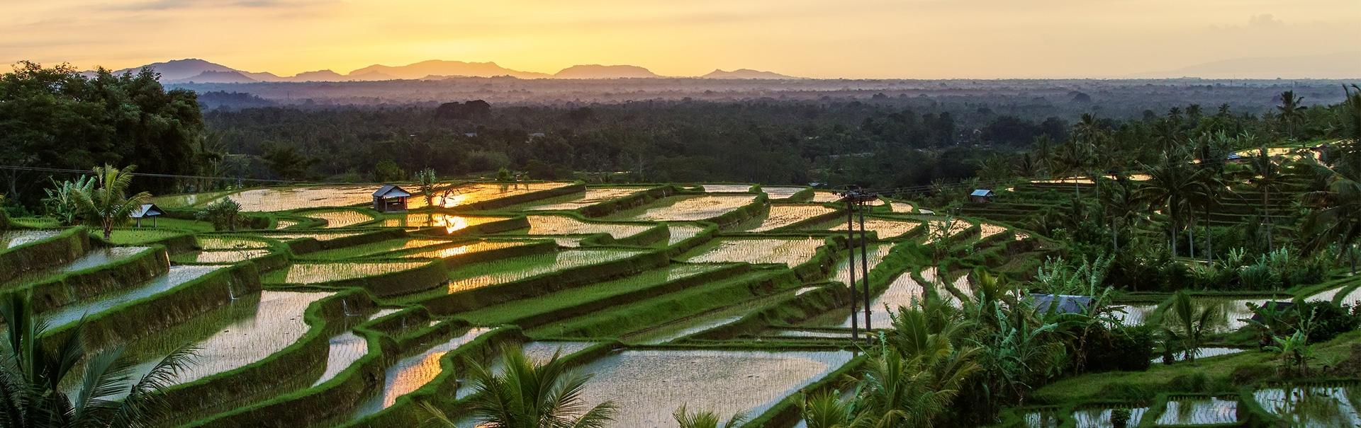 Bali Extravaganza (SHIB8) Banner