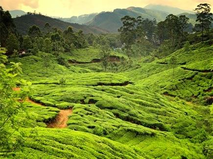 Kerala Festival Tours Travel Highlights
