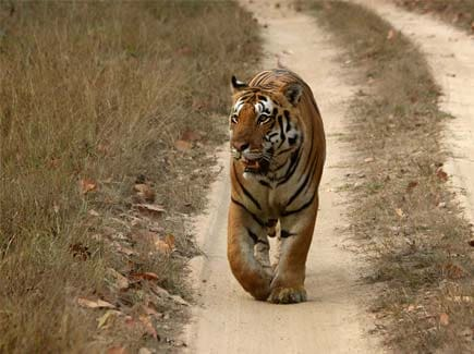 Kanha National Park (WTKN) Tour Package
