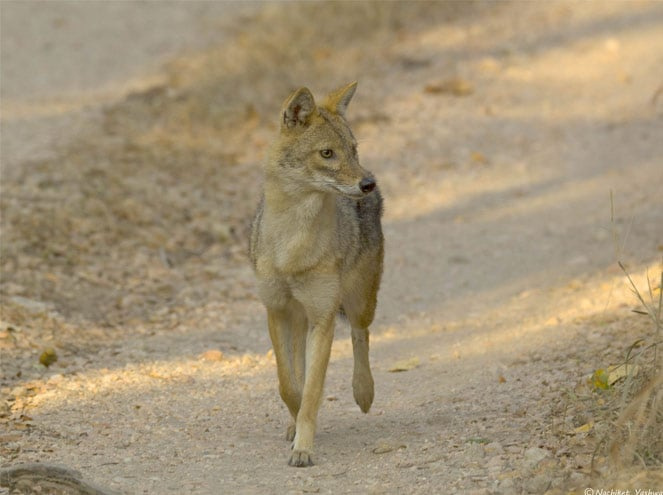 Madhya Pradesh Wildlife Tours Sightseeing 2
