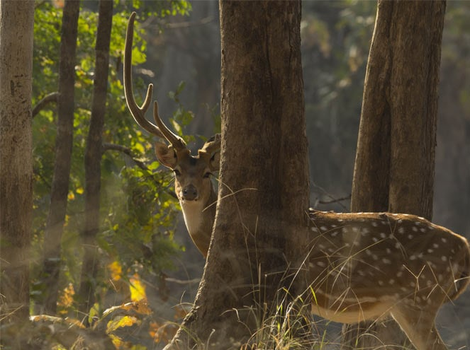 Madhya Pradesh Wildlife Tours Sightseeing 3