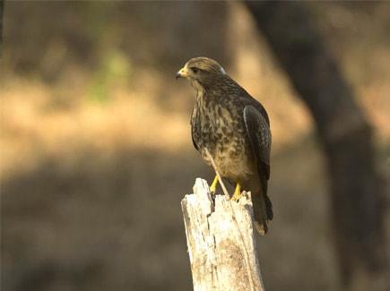 Madhya Pradesh Wildlife Tours Travel Highlights