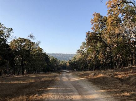 Madhya Pradesh Wildlife Tours Travel Highlights 3