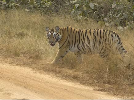 Tadoba Andhari Tiger Reserve (WTTN) Tour Package