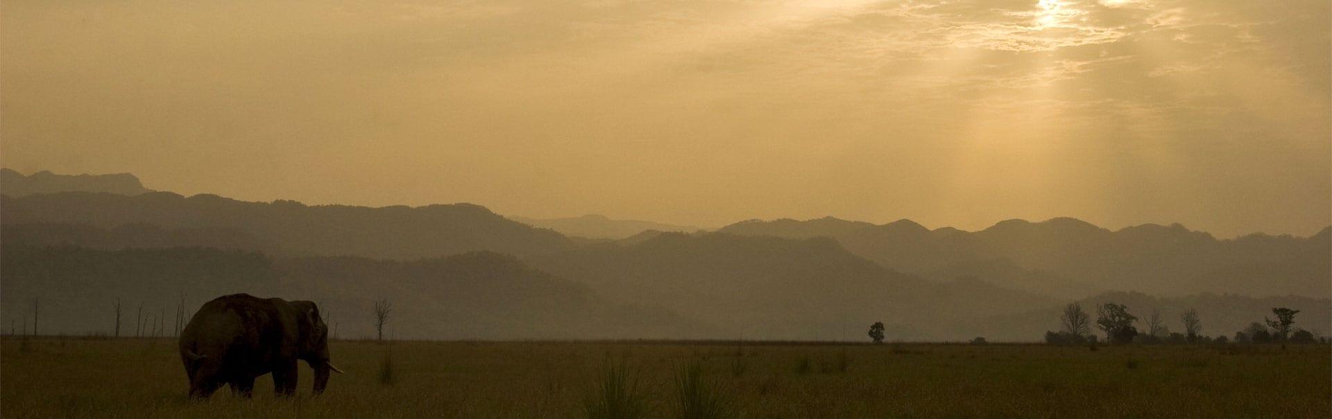 Nainital Mussoorie Haridwar Corbett Kingdom of Dreams (NIJW) Banner