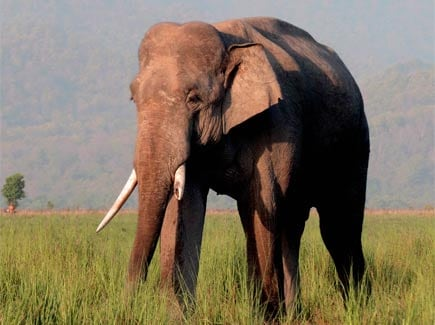 Dudhwa National Park - Ifly (WTDN(I)) Tour Package