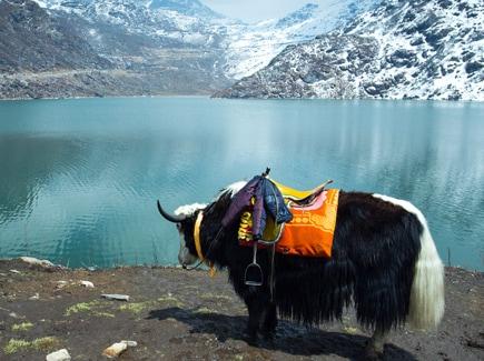 Sikkim Darjeeling Family Travel Highlights 1