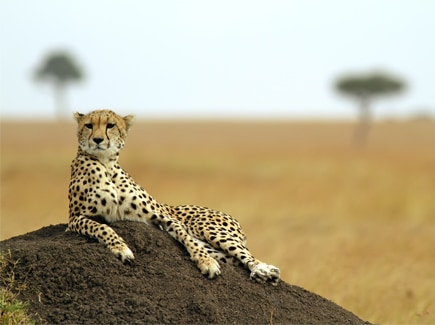Africa Family Travel Highlights