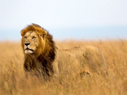 South Africa Kenya Victoria Falls (AFJW) Tour Package