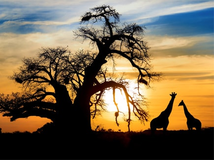 Africa Tours in 1.25 Lakhs Travel Highlights 2