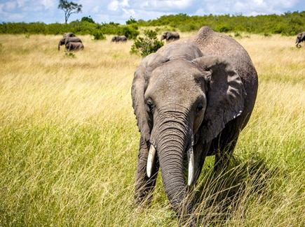 Africa Tour Packages - Book Africa Travel Packages from India