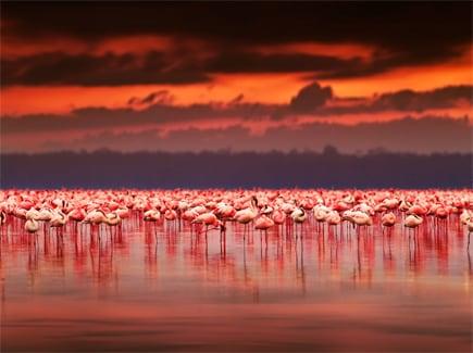 Mauritius Kenya (AFMK) Tour Package