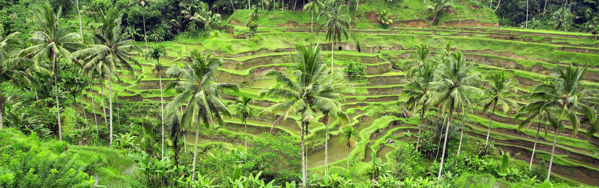 7 Days 6 Nights Bali Magic Family Tour Package Veena World