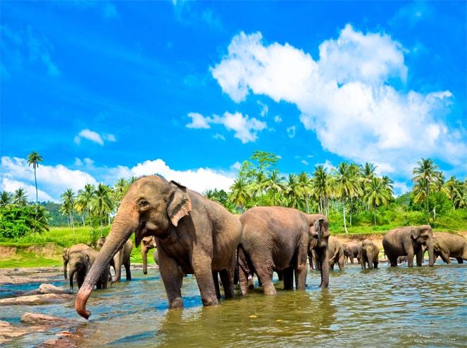 Sri Lanka Family Sightseeing 3