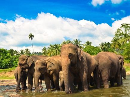 Sri Lanka Seniors Special Travel Highlights