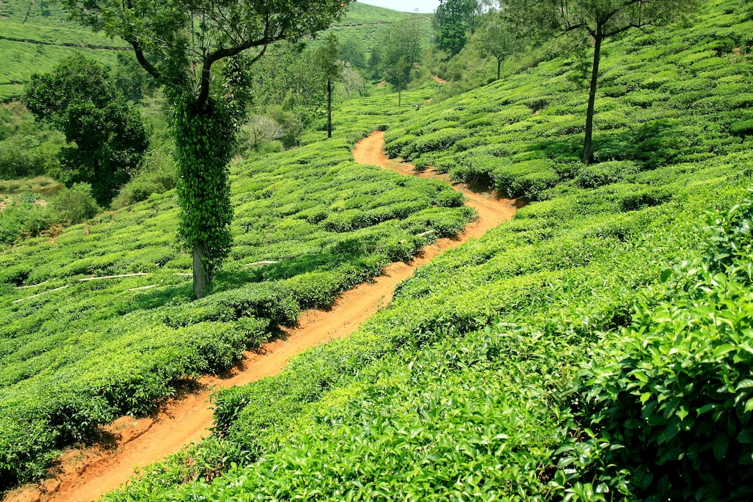 Kerala Feature Image