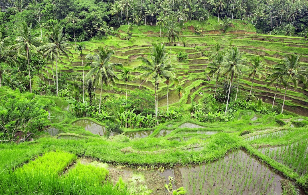 Tegallalang Rice Fields Ubud