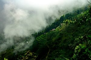 Darjeeling West Bengal – The Hill Station Of Tea Plantations