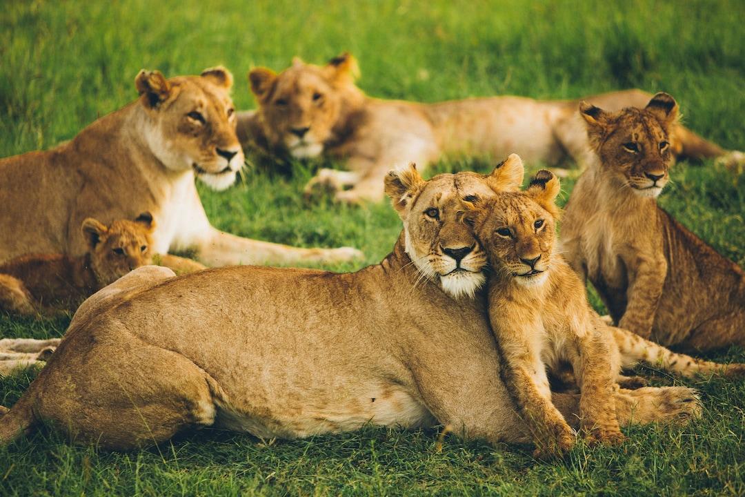 Wilderness of Masai Mara