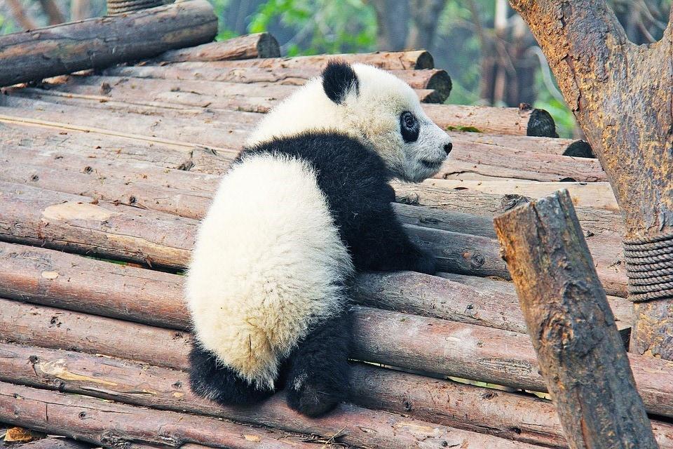 Interact With Pandas