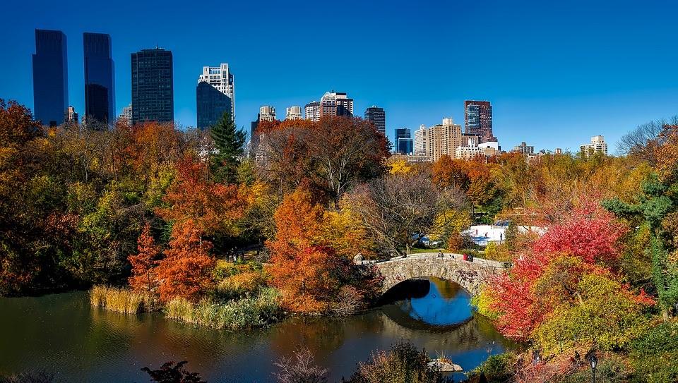 Frolic In Central Park