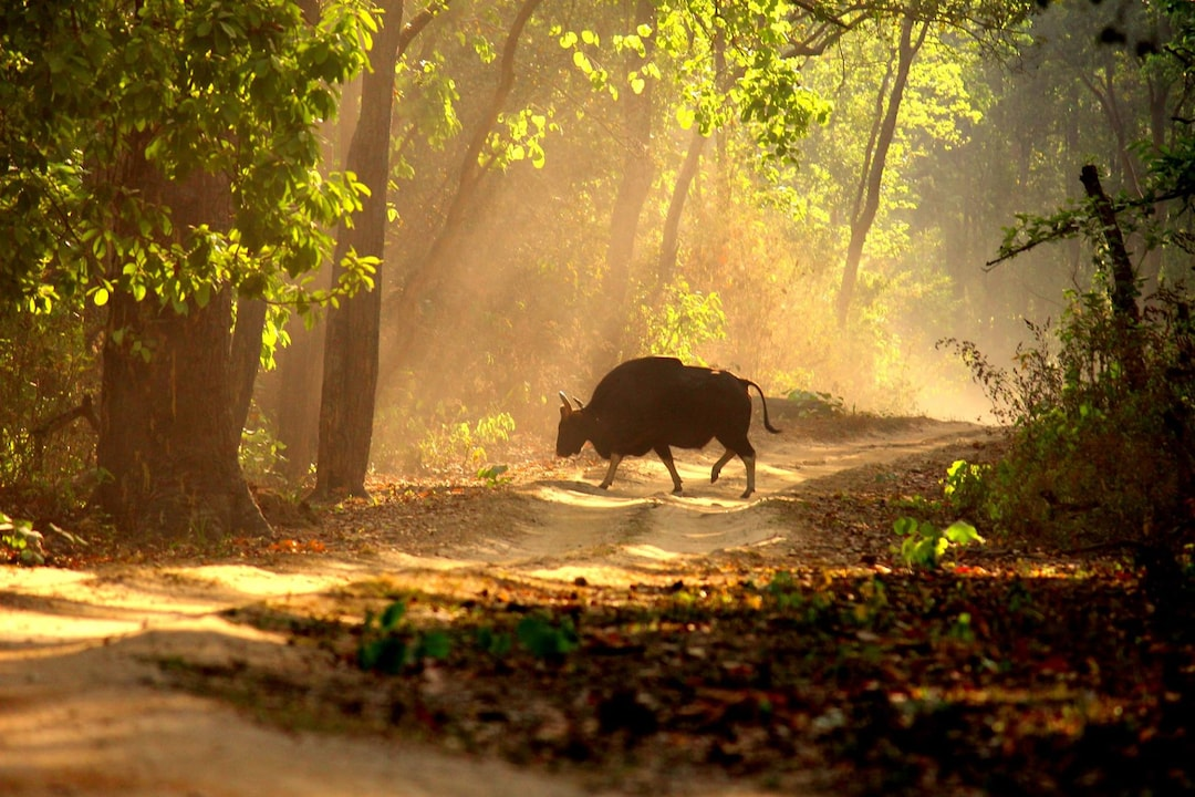 Zones to explore in Kanha National Park