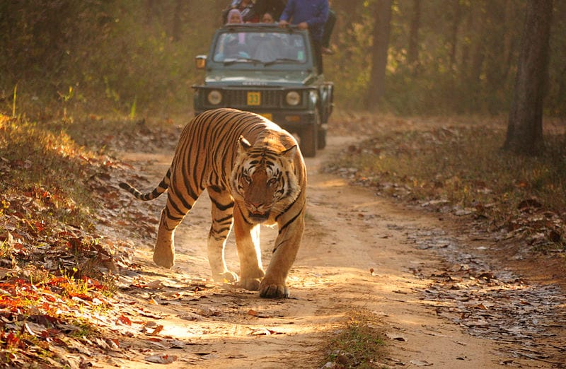 The Best time to visit Kanha National Park