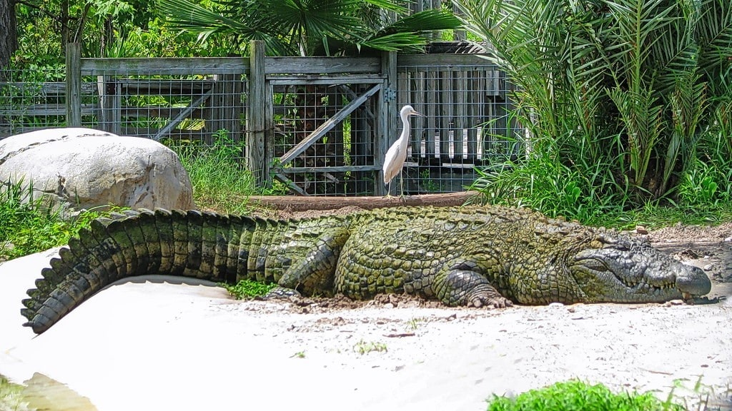 Feed Baby Alligators at Gatorland