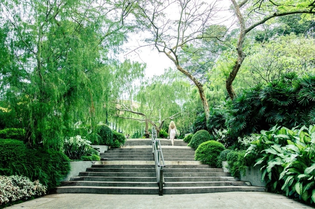 Soak in the Beauty of Singapore Botanical Gardens