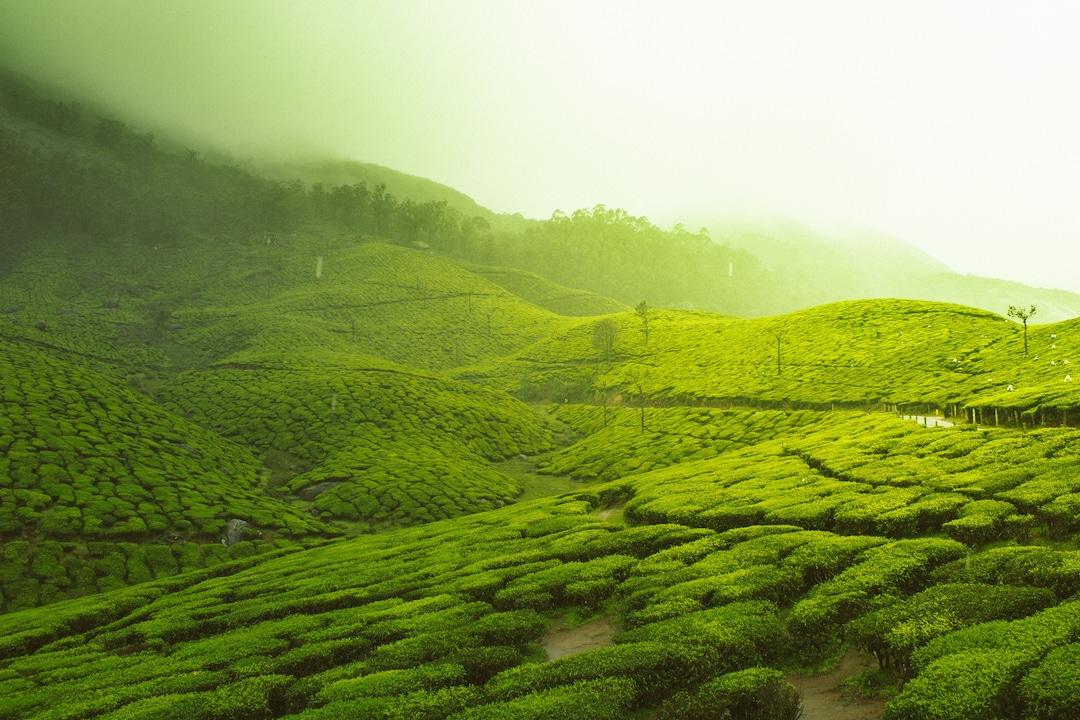 Munnar – Love amid the tea gardens