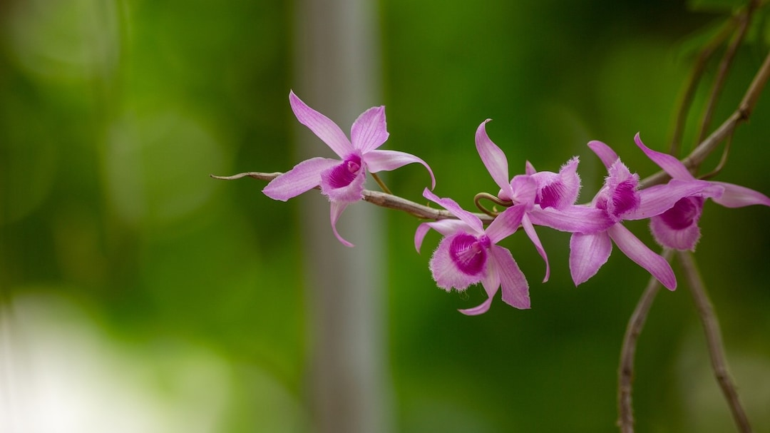 Experience The Magic Of Manipur's Orchid Garden
