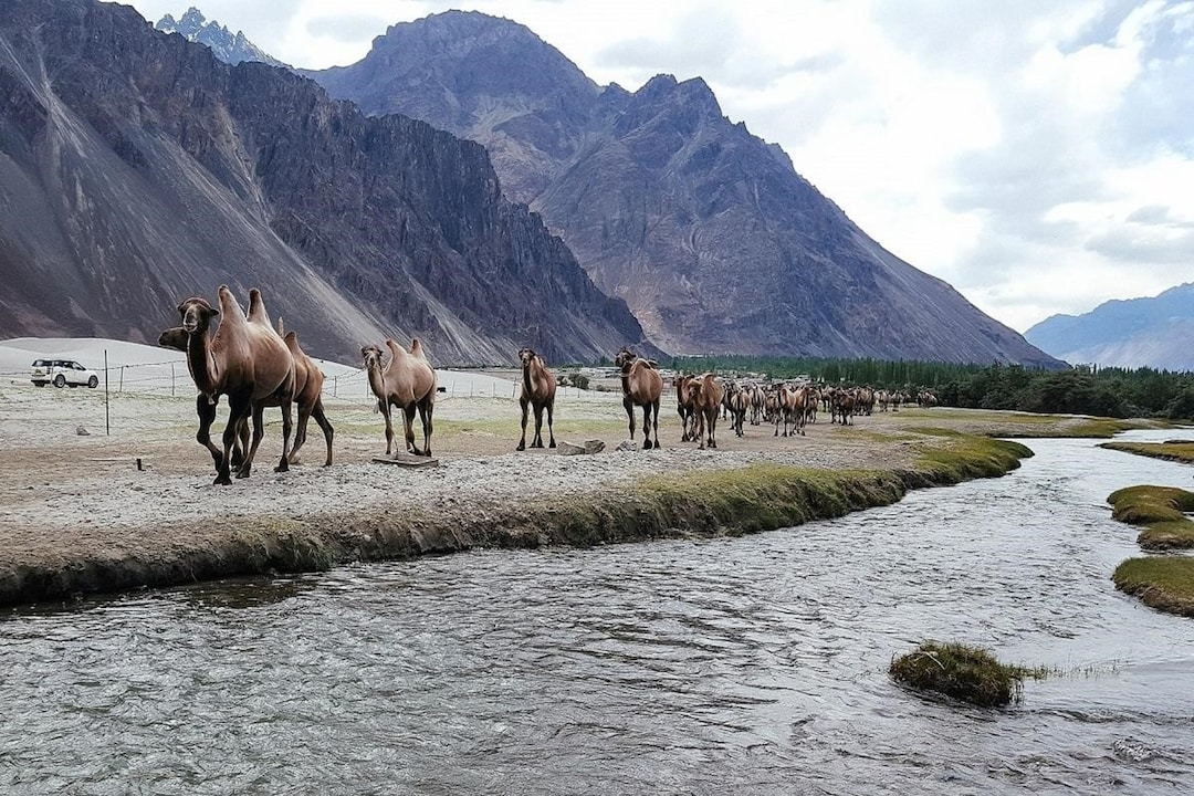 Nubra Valley A Camping Hotspot For Adventure Seekers