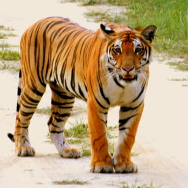 International Tiger Day How I Spotted Tigers In National Parks In India