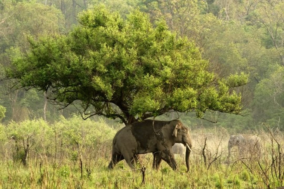 Wildlife Safari Experience In India A Beginners Guide