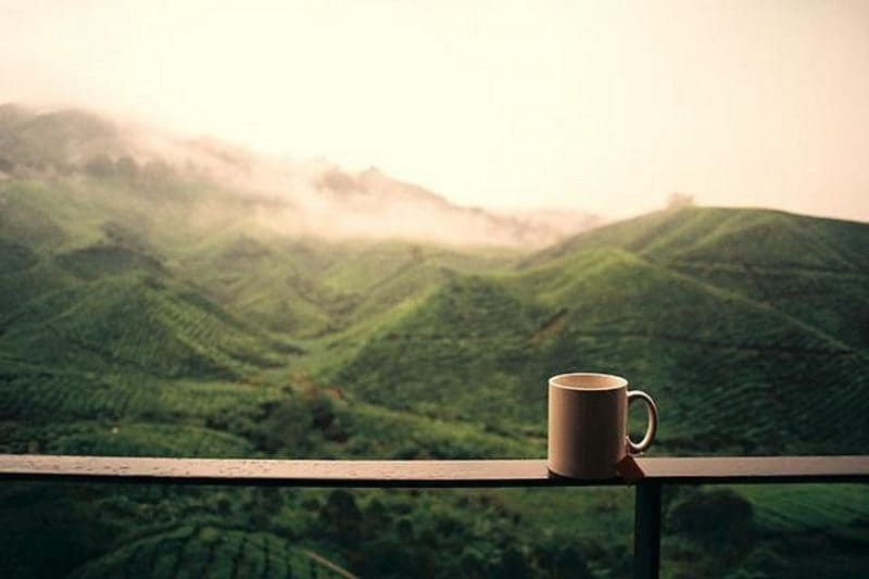 Tea Types And Their Origin Every Chai Lover Needs To Know This