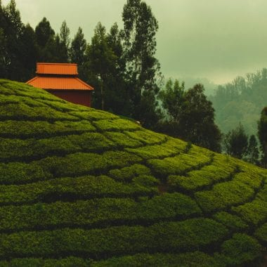 9 Hill Stations To Visit In Tamil Nadu