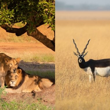 Top 10 National Parks Of Gujarat For Wildlife Sanctuaries