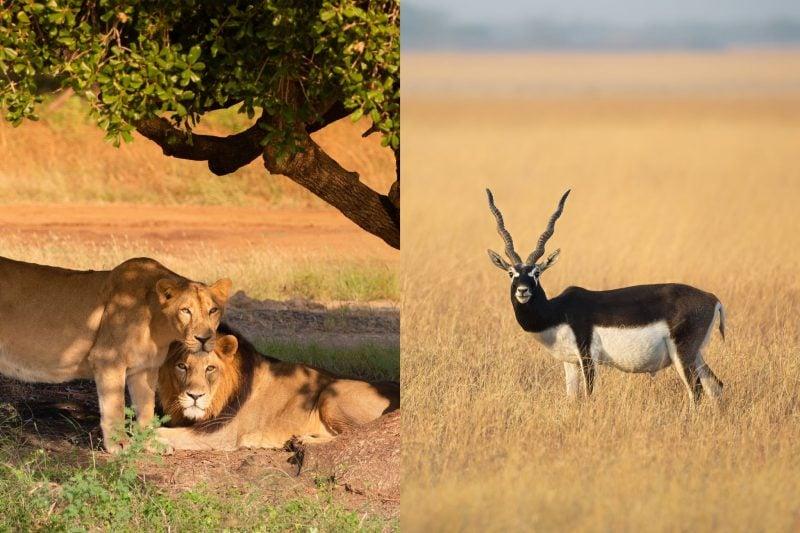 Top 10 National Parks Of Gujarat For Wildlife Sanctuaries